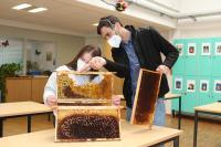 Aufklärung zum Thema Bienen